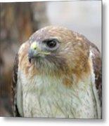 Audubon Quality Metal Print