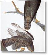 Audubon: Red-tailed Hawk Metal Print