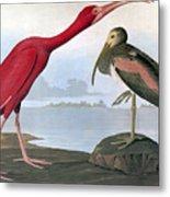 Audubon: Scarlet Ibis Metal Print