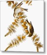 Audubon: Siskin Metal Print