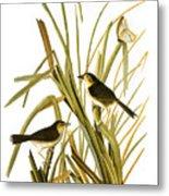 Audubon: Sparrow, (1827) Metal Print