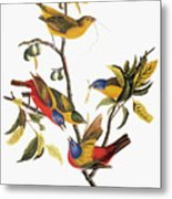 Audubon: Sparrows Metal Print