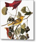 Audubon: Tanager Metal Print