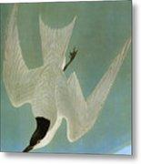 Audubon: Tern Metal Print