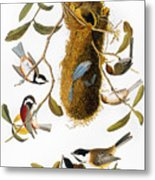Audubon: Titmouse Metal Print