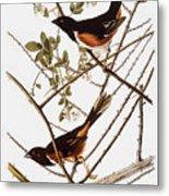 Audubon: Towhee Metal Print