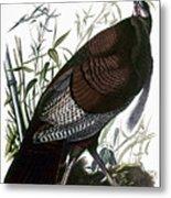 Audubon: Turkey Metal Print
