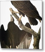 Audubon: Turkey Vulture Metal Print