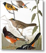 Audubon: Various Birds Metal Print