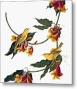 Audubon: Vireo, 1827-38 Metal Print