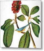 Audubon: Warbler Metal Print