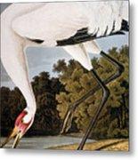 Audubon: Whooping Crane Metal Print