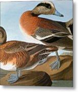 Audubon: Wigeon, 1827-38 Metal Print
