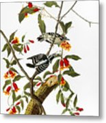 Audubon: Woodpecker, 1827 Metal Print