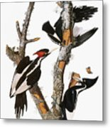 Audubon: Woodpecker Metal Print