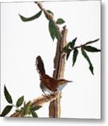 Audubon: Wren, (1827-38) Metal Print by Granger