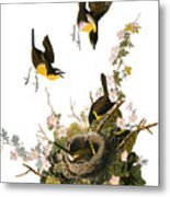 Audubon: Yellow Chat, (1827-38) Metal Print