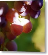 Auntie Thelma's Grapes - Ripening Metal Print