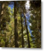 Aupouri Forest Metal Print