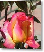 Aurora Color Rose Bud. Wow Metal Print