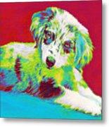 Aussie Puppy Metal Print