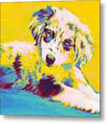 Aussie Puppy-yellow Metal Print