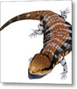 Australia Blue-tongued Skink Metal Print