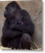Australia - Baby Gorilla In Mums Arms Metal Print
