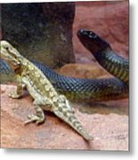 Australia - The Taipan Snake Metal Print