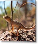 Australian Dragon Metal Print