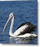 Australian Pelican B Metal Print
