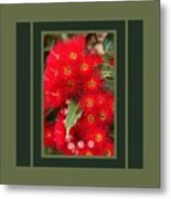 Australian Red Eucalyptus Flowers With Design Metal Print