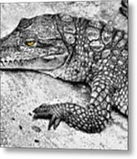 Australian Shy Crocodile  Metal Print