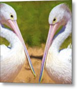 Australian White Pelicans Metal Print