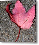 Autum Maple Leaf 2 Metal Print