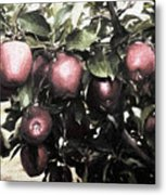 Autumn Apples - Luther Fine Art Metal Print