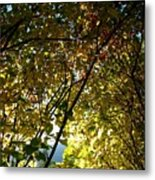 Autumn Archway Metal Print