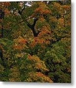 Autumn Arrives Metal Print