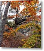 Autumn At Beech Forest Metal Print