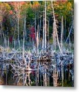 Autumn At Moosehead Bog Metal Print