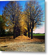 Autumn Avenue Metal Print by Niki Mastromonaco