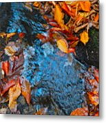 Autumn B 2015 183 Metal Print