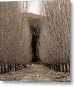 Autumn Bares Her Trees Metal Print