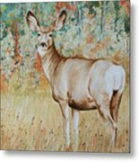 Autumn Beauty- Mule Deer Doe  Metal Print