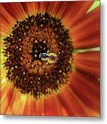 Autumn Beauty Sunflower Metal Print
