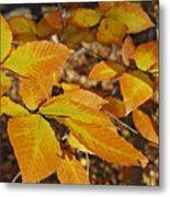 Autumn Beech  Metal Print by Michael Peychich
