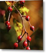 Autumn Berries Metal Print