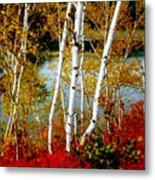 Autumn Birch Lake View Metal Print