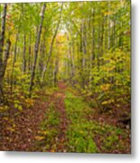 Autumn Birch Woods Metal Print