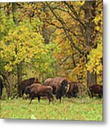 Autumn Bison Metal Print